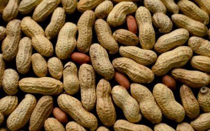 Desarrollan tratamiento contra alergia al maní