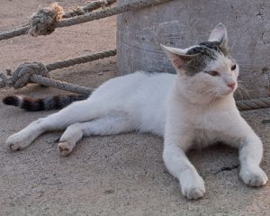 Reos usan gatos para meter celulares a la cárcel (Video)