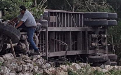 Cerdos no llegan vivos a su destino, vuelca camión que los transportaba